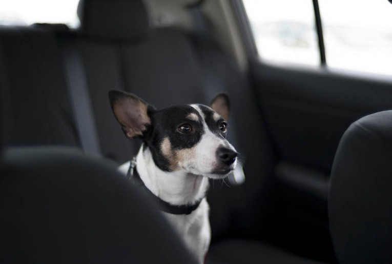 The Backseat Driver